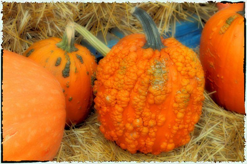 Pumpkins-1 Polaroid4x6
